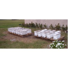 "Nucleas Hive of Honey Bees Established 5 Frame -- ""NUC"""