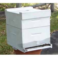 Hive of Honey Bees Established 10 Frame
