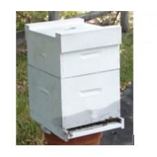 Hive of Honey Bees Established 8 Frame